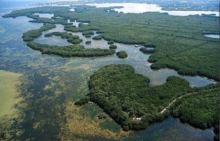 Pinellas County Florida  Weedon Island Preserve